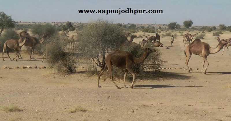 New Bacteria Found in Thar Desert, to Convert Barren Land into Green