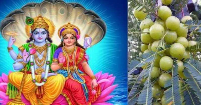 Amla Navami 2019: भगवान विष्णु और शिव की कृपा के लिए करें आंवले के पेड़ की पूजा, जानिए आंवला (अक्षय) नवमी पूजा विधि, कथा व महत्व, आइये जानते हैं - आंवला नवमी व्रत की महिमा, आंवला नवमी कब है, आंवला नवमी का शुभ मुहूर्त, आंवला नवमी का महत्व, आंवला पूजा विधि, आंवला नवमी व्रत कथा, आंवला नवमी से जुड़ी सम्पूर्ण जानकारी के बारे में।